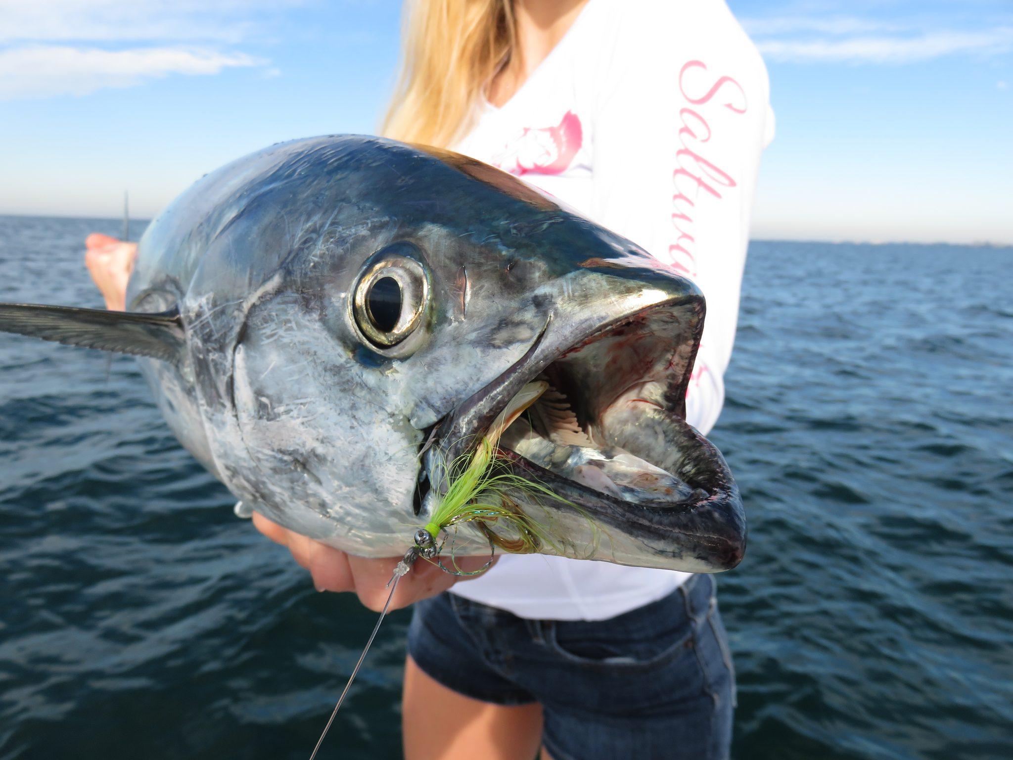fly fishing sarasota gulf